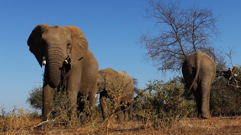 Conservation Africa News - An African Safari
