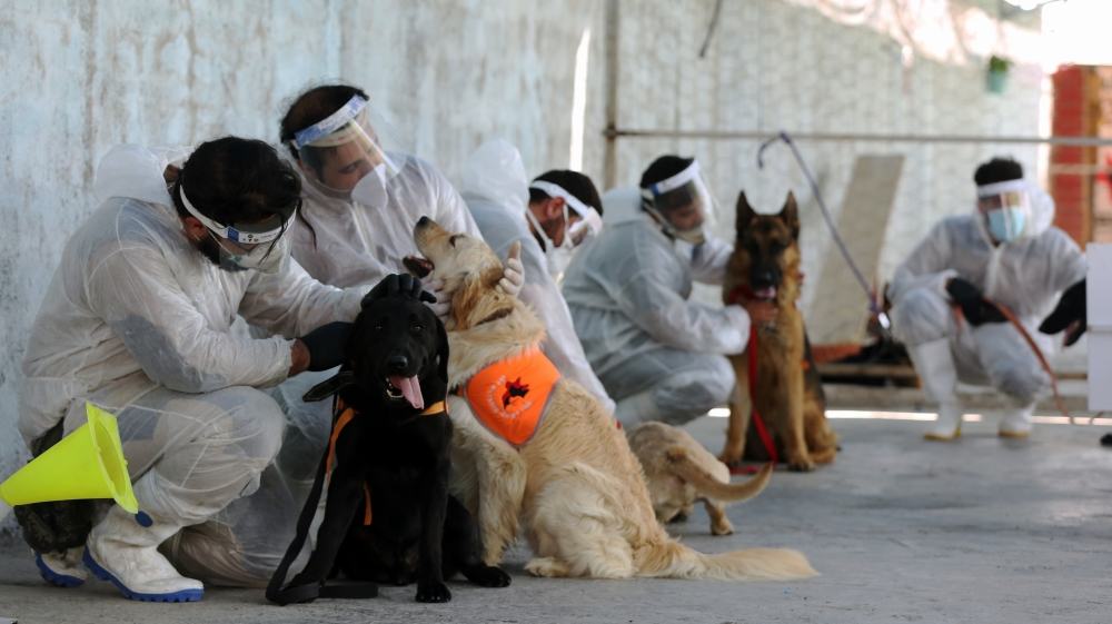 Dogs in Iran trained to sniff out Covid-19