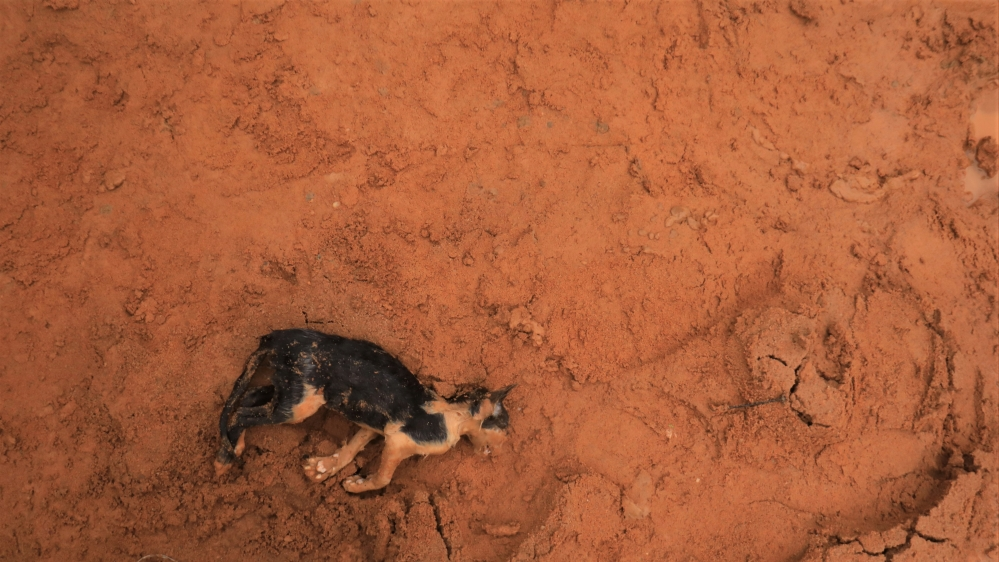 A dead cat is pictured at an area affected by landslide after unusually heavy rains in Anyama