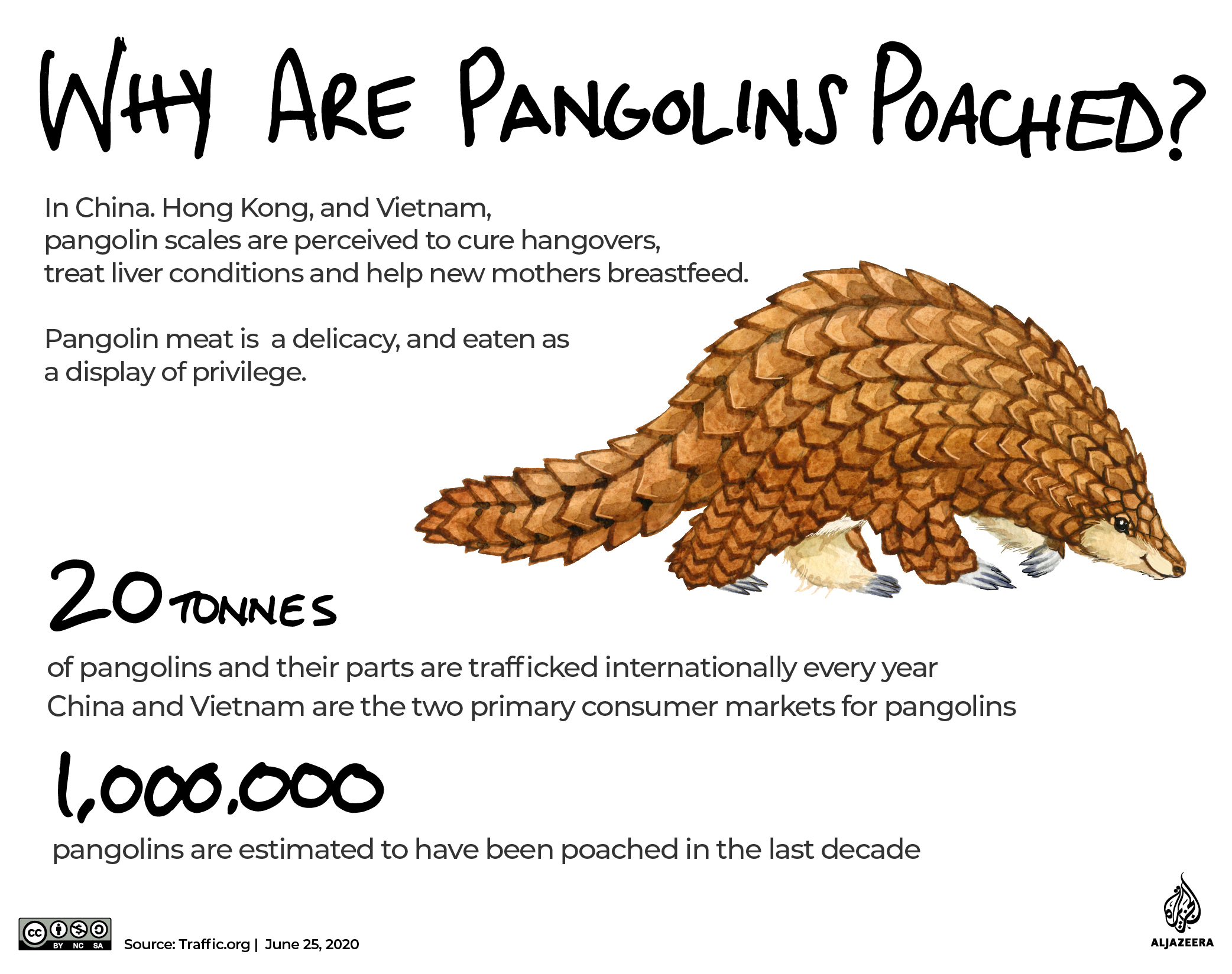 Conservation Africa News - INTERACTIVE: The Green Read - pangolins and poaching