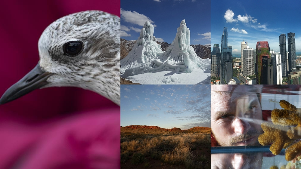 Five films to watch on World Environment Day thumbnail