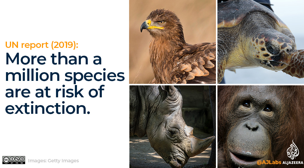 Interactive: Green Read endangered species