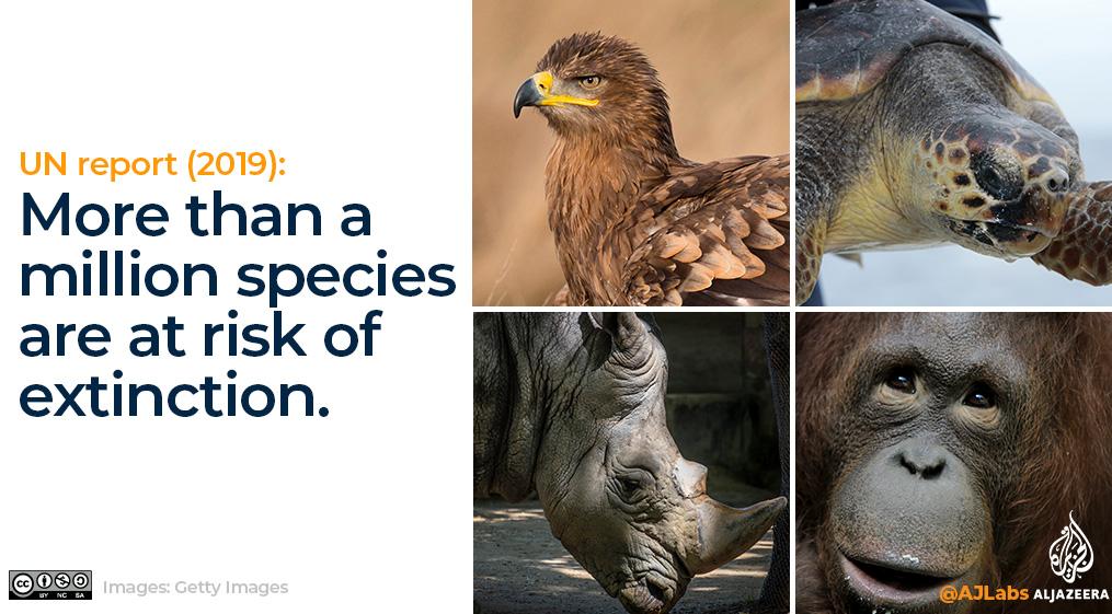 Interactive: Green Read endangered species
