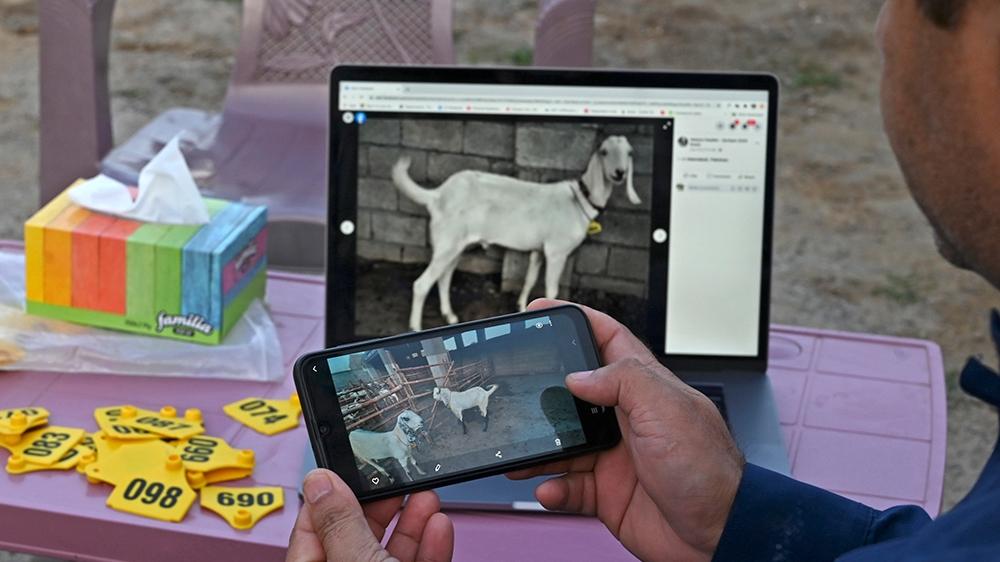 animal sellers online