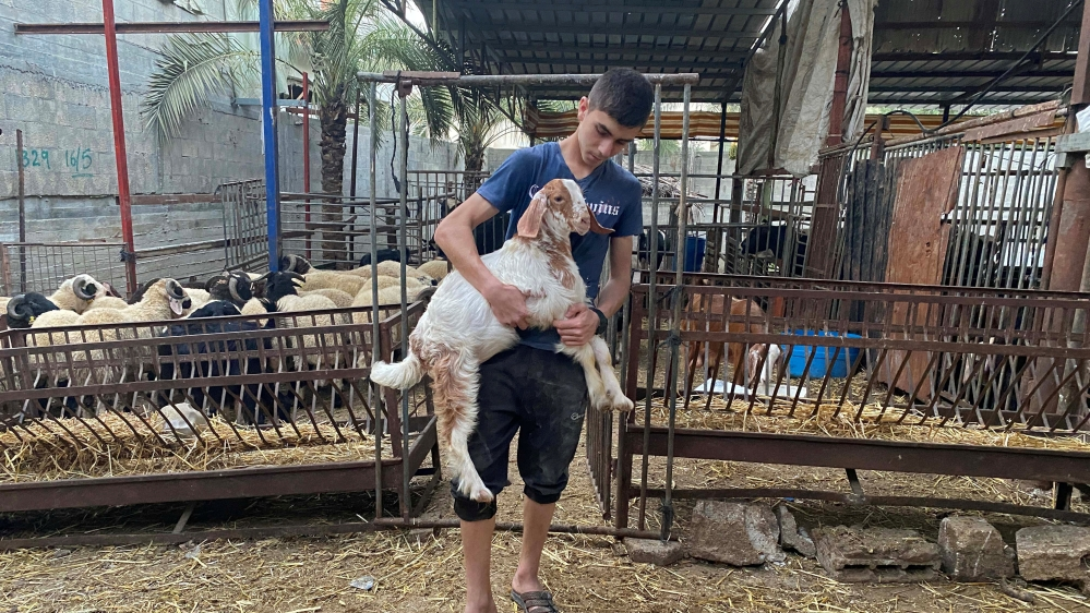 A Palestinian boy carries a goat in a farm where livestock are sold for the upcoming Eid Al Adha sacrifice, in the northern Gaza Strip