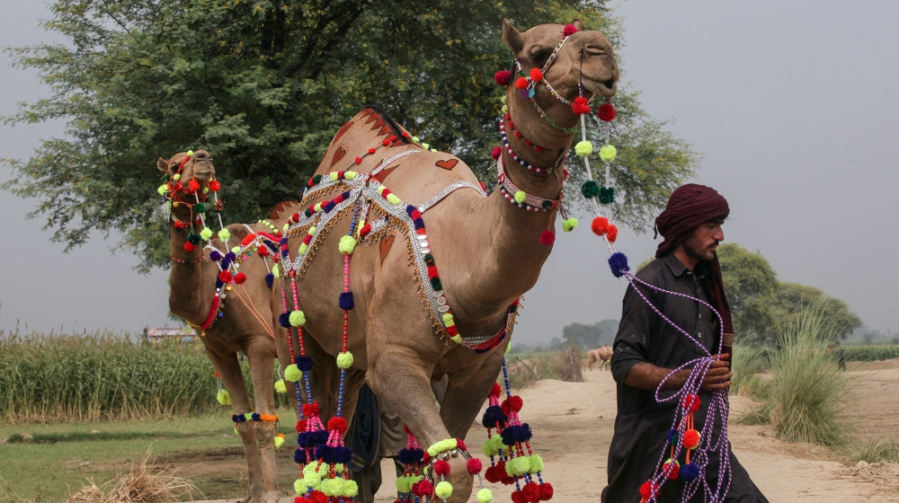 What is Eid al-Adha and how is it celebrated? thumbnail