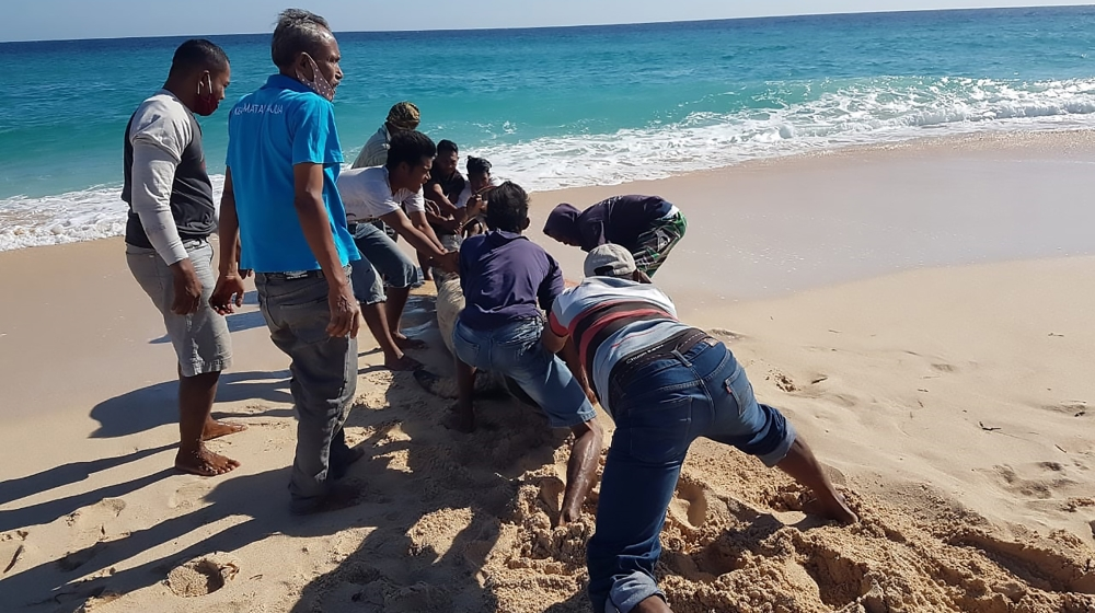 This handout picture taken and released on July 30, 2020 by Indonesian nature conservation agency (BKSDA) shows villagers trying to push a still-living whale back into the sea at Lie Jaka beach in Sab