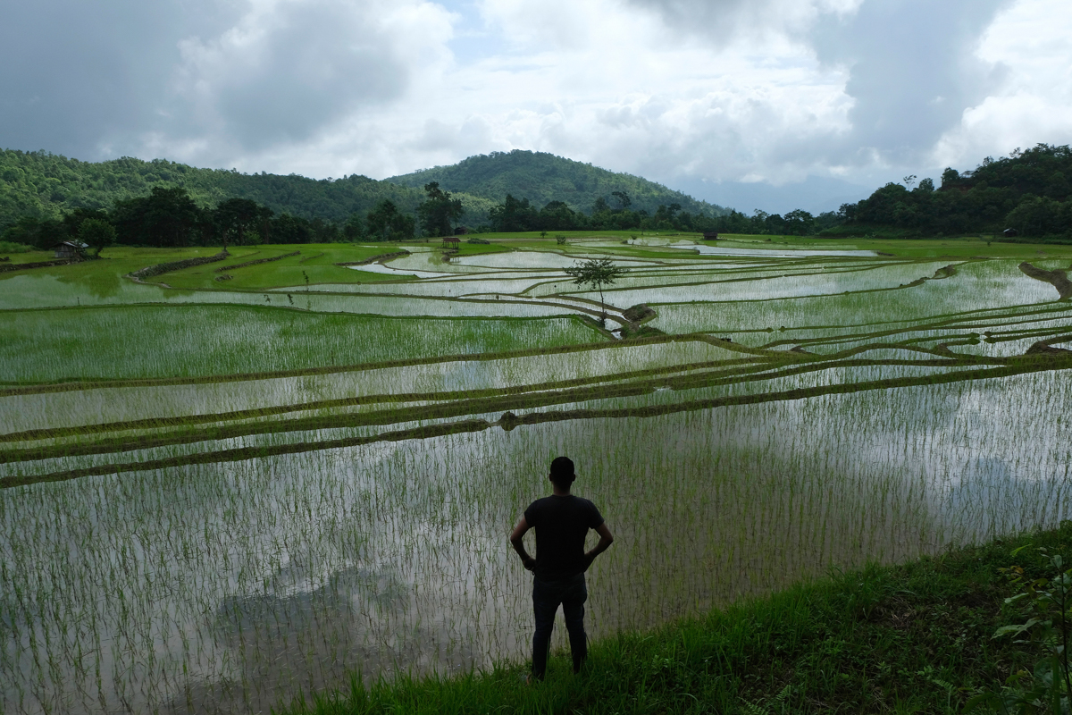 Rice fields in Mima, about 20 kilometres (12 miles) from Kohima, the capital of the northeastern Indian state of Nagaland. [Yirmiyan Arthur/AP Photo]