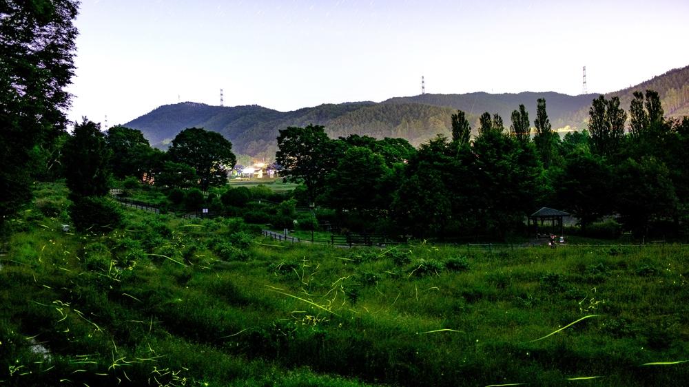 Japan fireflies