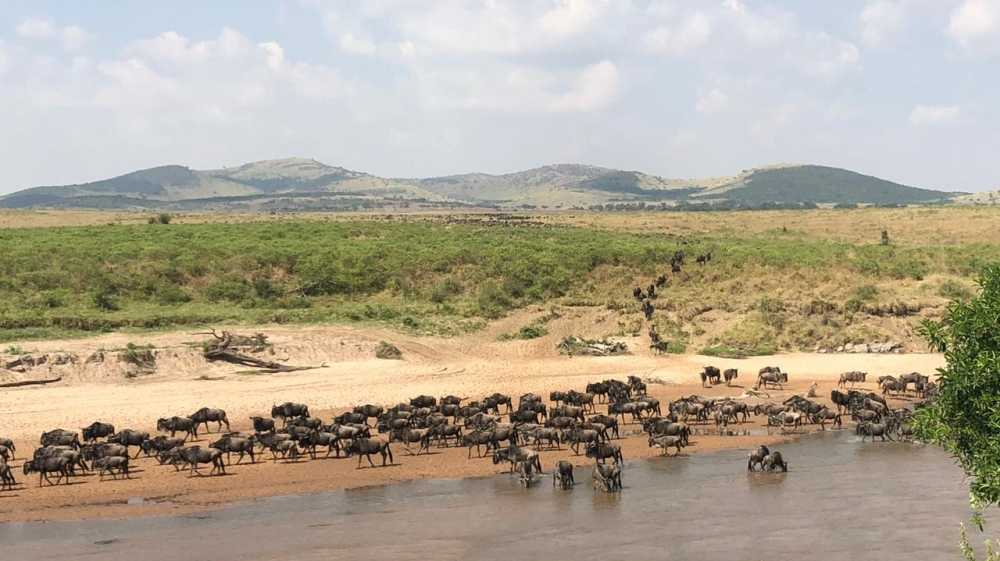 Kenya: As wildebeest migrate, few tourists to witness nature's theatre thumbnail