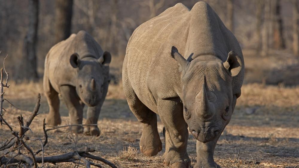 Namibia: Rhino poaching falls by more than 60 percent thumbnail