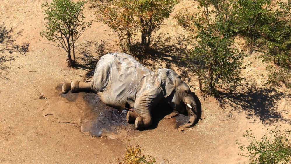 Botswana authorities identify cause of mysterious elephant deaths thumbnail