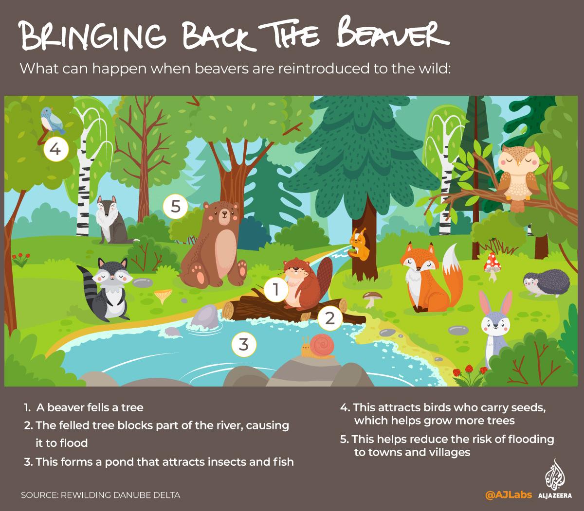 Green Read - Beaver