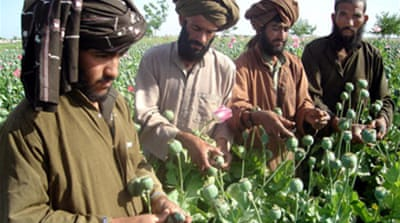 UN: Decline in Afghan poppy trade