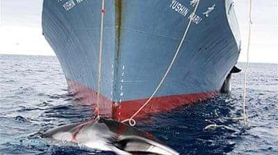 Australia to act on Japan whaling