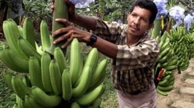 Deal ends banana trade dispute