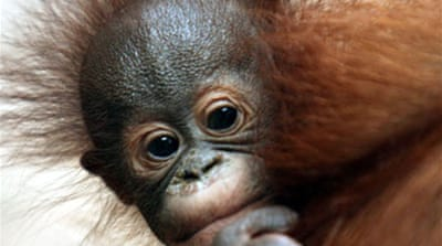 Half of primates 'face extinction'
