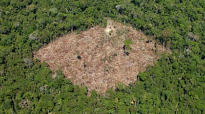 UN says world deforestation slowing