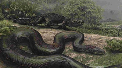 Mega-snake fossil found in Colombia