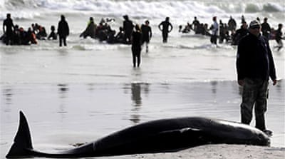 Stranded whales killed in S Africa