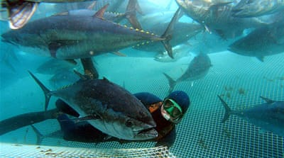 Australia to protect tuna stocks