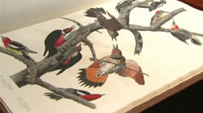 Rare book on birds worth millions