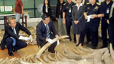 Ivory seized in Thai customs bust