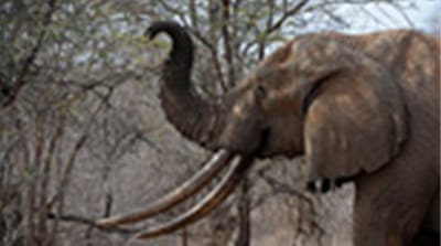 UN rejects bids to sell ivory stock