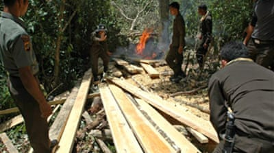 Indonesia declares logging halt