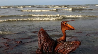 BP begins capturing Gulf oil spill