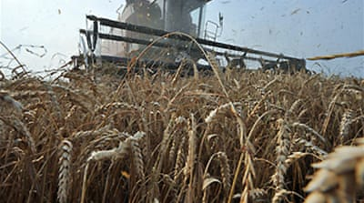 Russia imposes ban on grain exports