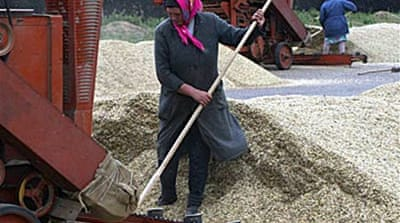 Russia bans exports of grain