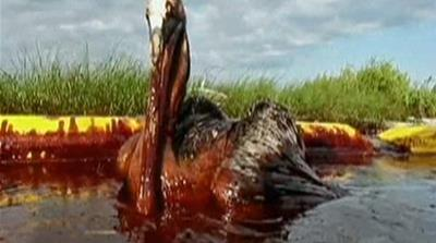 Probe blames firms for US oil spill