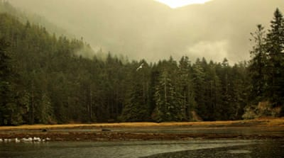 Conserving Canada's Great Bear Rainforest