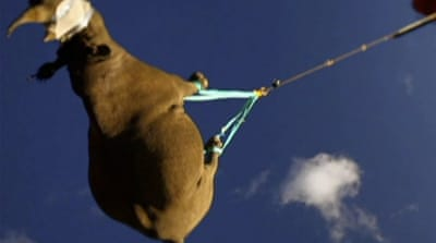 Flying rhinos to safety