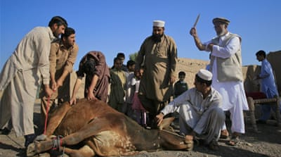 Pakistan floods affect livestock prices