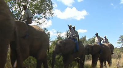 Jumbo boost to rhino safety