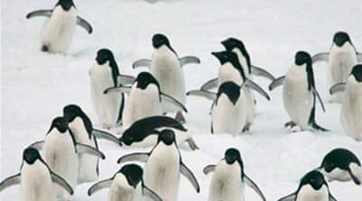 Threats to Antarctica's penguins heat up