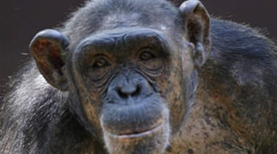 Experimental AIDS vaccine 'works in monkeys'