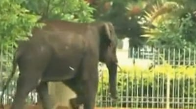 Wild elephants rampage through Indian city