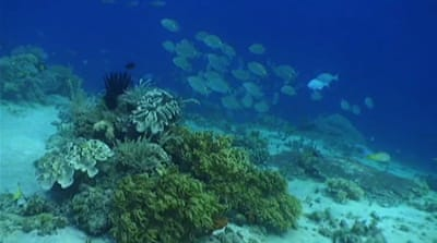 East Timor's coral reefs threatened