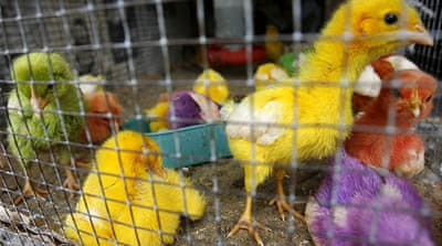 UN warns of mutant strain of bird flu virus