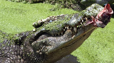 Thai park crocodiles at large after floods