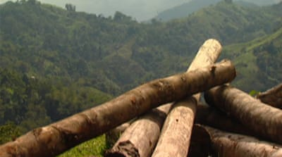 Illegal logging endangers south Philippines