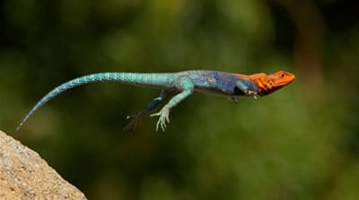 Leaping lizards give technology a nudge