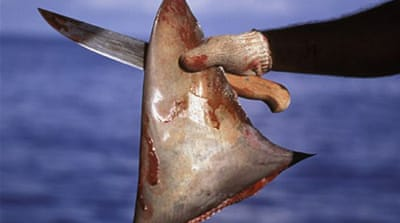 Fighting shark finning in Costa Rica