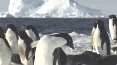Conservationists push for Antarctic reserve