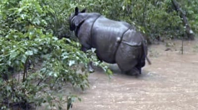 Nepal deploys drones to fight rhino poachers