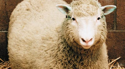 Remembering the sheep that changed the world