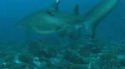 Aussie mission to save sharks